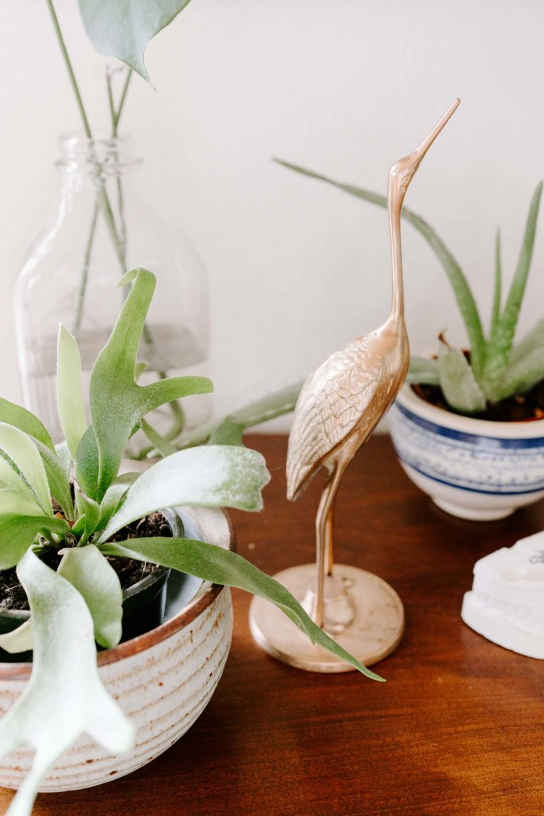 My tips for taking care of your succulents